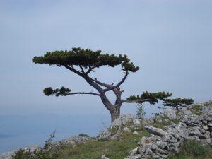 Flora on Island of Hvar - Villa Dane